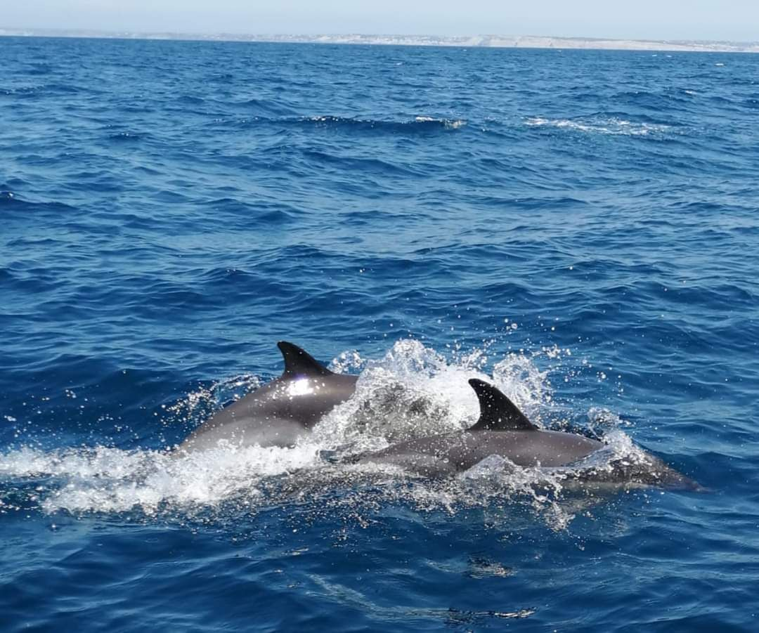 Lagos Grotto Trips - Dolphins Watching